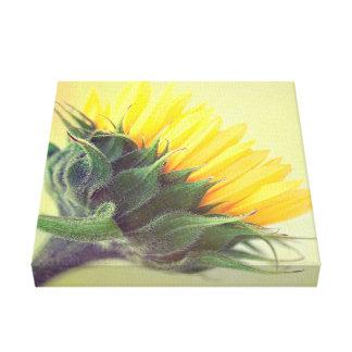 Sunflower poster delight .. canvas print