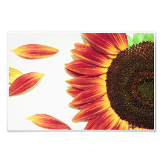 Sunflower Red Details:  Gold and Red Photo Print