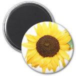 SunFlower Refrigerator Magnets