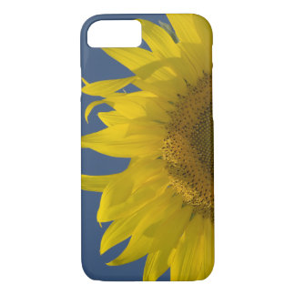 Sunflower Rising iPhone 8/7 Case