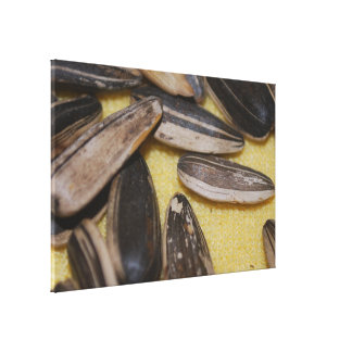 Sunflower Seeds Stretched Canvas Print
