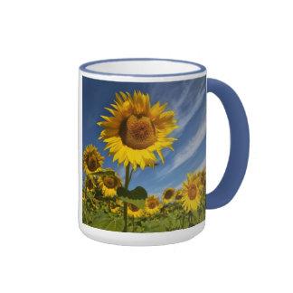 sunflower seranade ringer mug