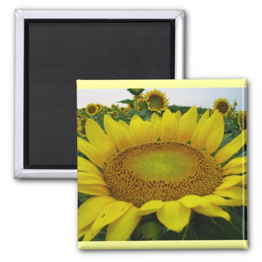 Sunflower Series Square Magnet