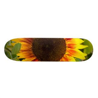 Sunflower Skateboard Decks