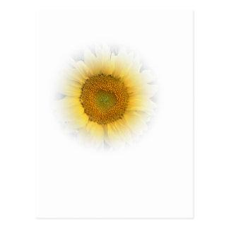 Sunflower Sonnenblume Postcard