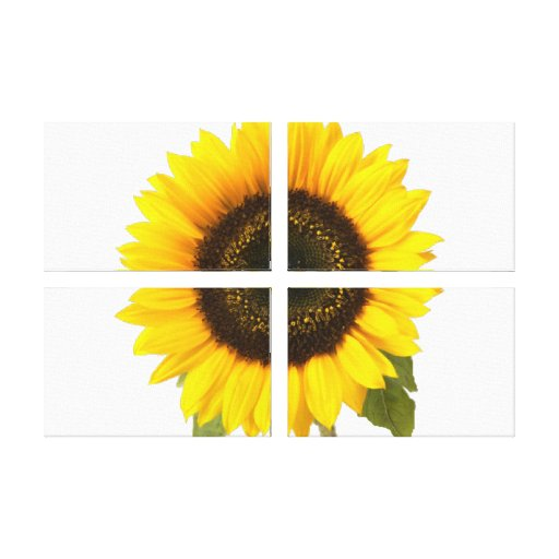Sunflower Stretched Canvas Prints
