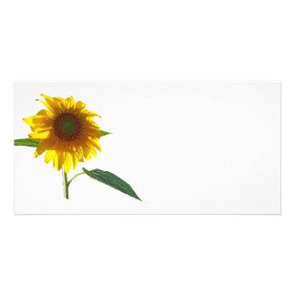Sunflower Sunbathing Customized Photo Card