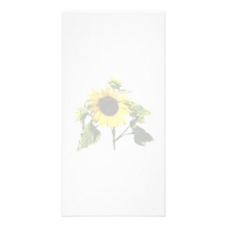 Sunflower Taking a Bow Photo Greeting Card