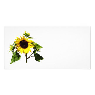 Sunflower Taking a Bow Personalised Photo Card