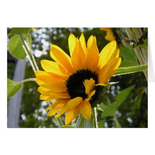 Sunflower @ The Children's Garden Card
