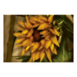 Sunflower - The Sunflower Print