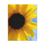 ~SuNFLoWeR TRio oN CaNVaS #1~ Canvas Prints