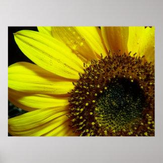 Sunflower Up Close Poster