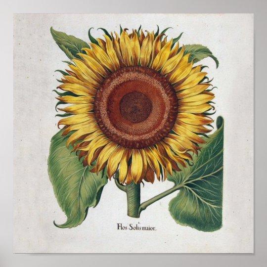 Sunflower Vintage Damask Wallpaper Collage Poster   Zazzle ...