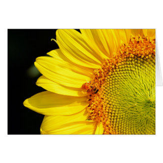 Sunflower With Honeybee Blank Card