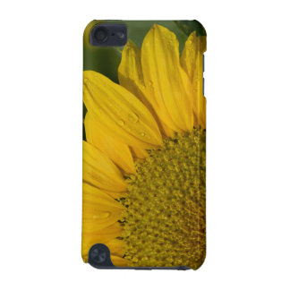 Sunflower With Raindrops iPod Touch Case