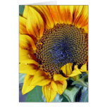 Sunflower with water droplets greeting card