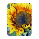 sunflower with water droplets magnets