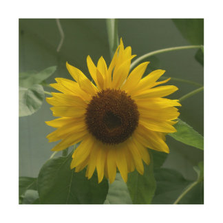 Sunflower, Wood Print. Wood Wall Art