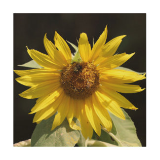 Sunflower, Wood Print. Wood Wall Art