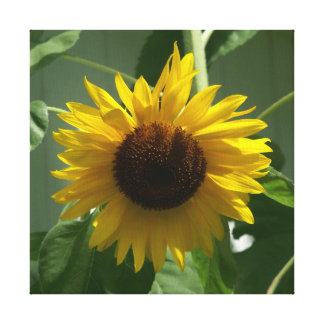 Sunflower, Wrapped Canvas Print.
