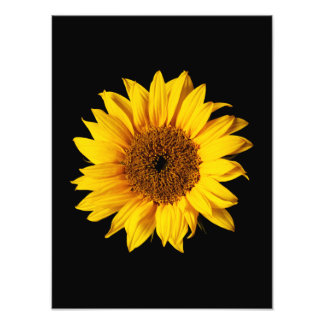 Sunflower Yellow on Black - Customized Sun Flowers Photo Print