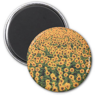 sunflowergrid 6 cm round magnet