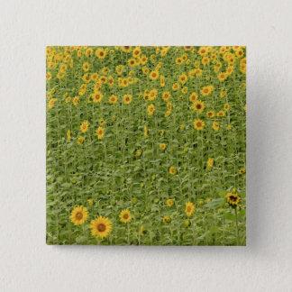 Sunflowers 15 Cm Square Badge