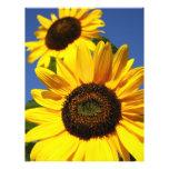 Sunflowers 21.5 Cm X 28 Cm Flyer