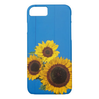 Sunflowers against blue fence iPhone 7 case