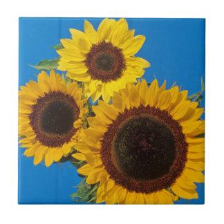Sunflowers against blue fence tile