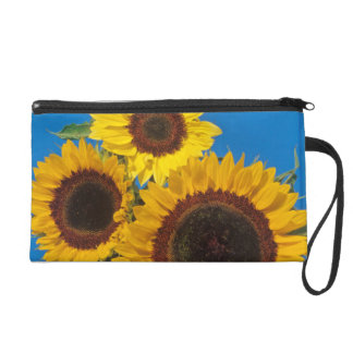 Sunflowers against blue fence wristlet clutches