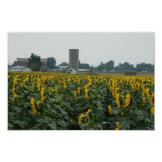 Sunflowers and Silo Poster