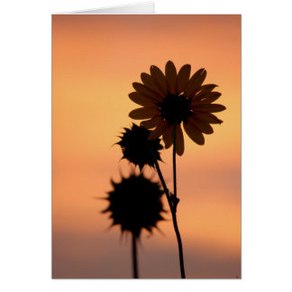 Sunflowers at Dawn Card