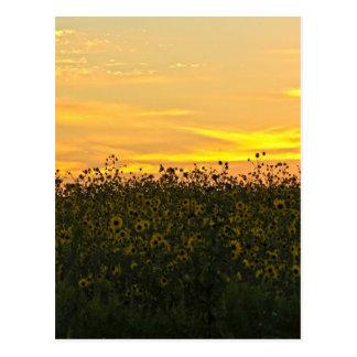 Sunflowers at Dusk Postcard