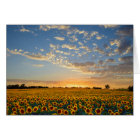 Sunflowers at Sunset Card