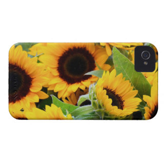 Sunflowers Blackberry Bold Barely There Case iPhone 4 Cover