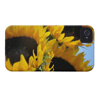 Sunflowers Blackberry Bold Barely There Case iPhone 4 Case-Mate Cases