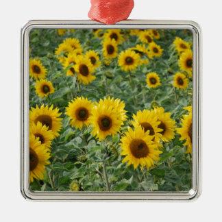 Sunflowers Christmas Ornament
