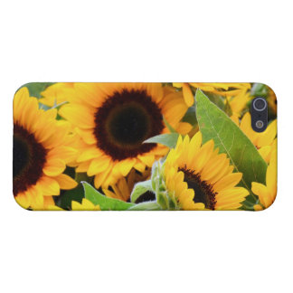 Sunflowers Cover For iPhone 5/5S