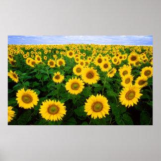 Sunflowers Forever Print