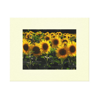 Sunflowers France Canvas Print