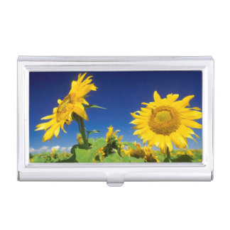 Sunflowers (Helianthus Annuus), Near Senekal Case For Business Cards