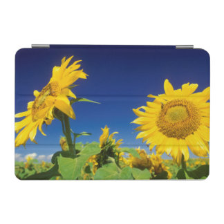 Sunflowers (Helianthus Annuus), Near Senekal iPad Mini Cover