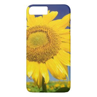 Sunflowers (Helianthus Annuus), Near Senekal iPhone 8 Plus/7 Plus Case