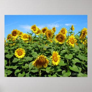 Sunflowers (Horizontal) Poster