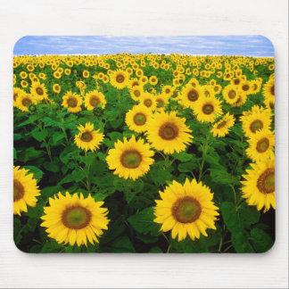 Sunflowers in Fargo North Dakota Mouse Pad