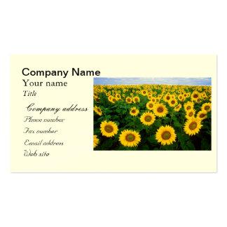 Sunflowers in Fargo, north Dakota Pack Of Standard Business Cards