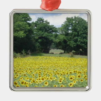 Sunflowers in Limousin Christmas Ornament