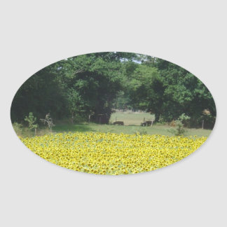 Sunflowers in Limousin Oval Sticker